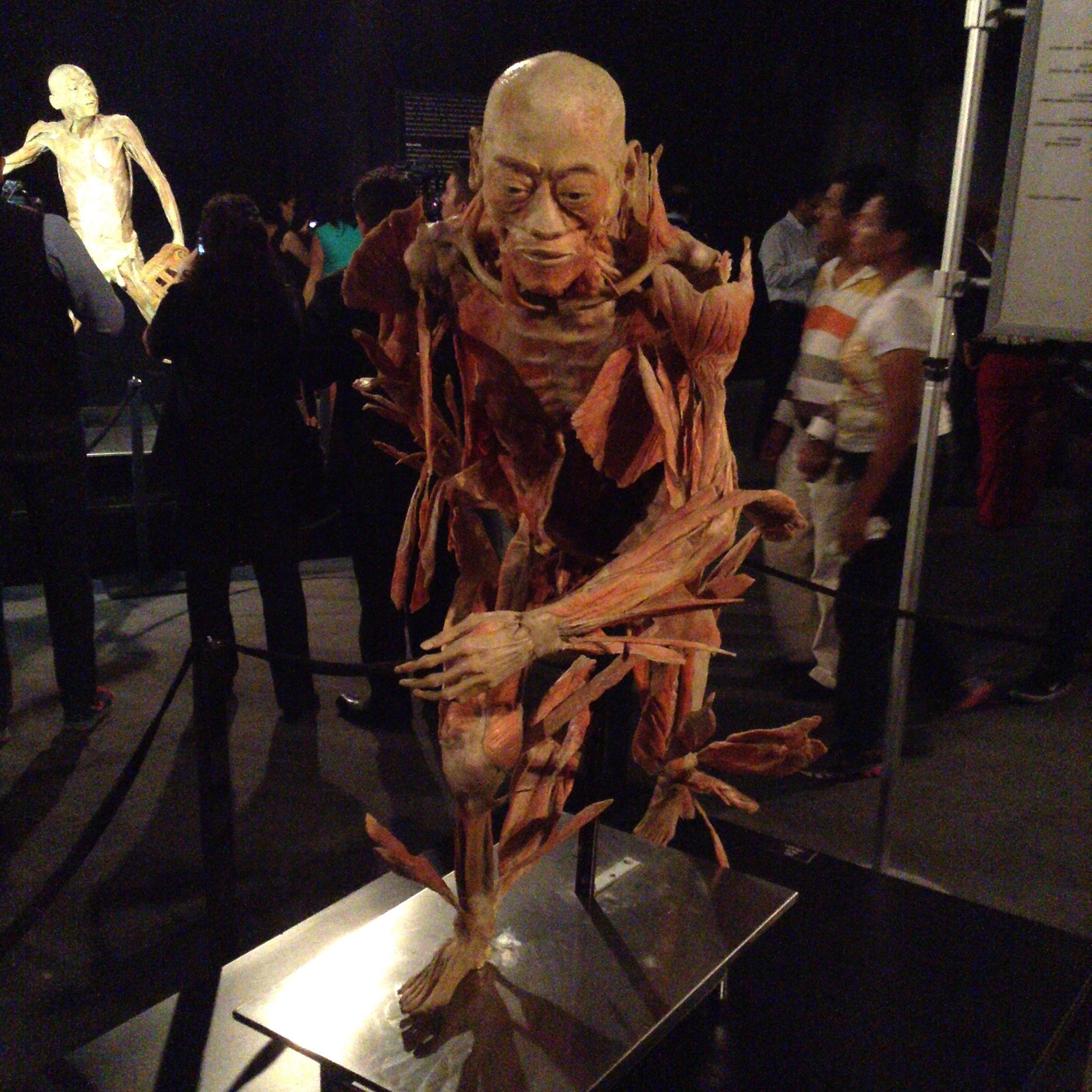 Se inauguró la Exposición Internacional Our Body, The Universe Within